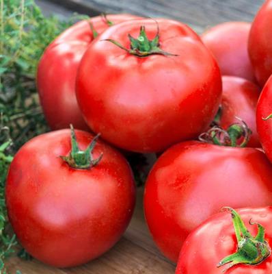 Veggie Tomato Better Boy 4 or 6 pack